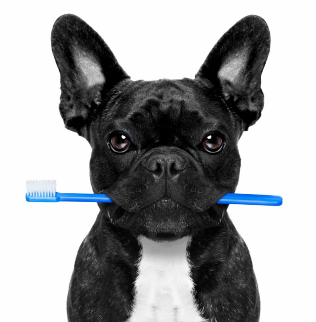 Dental Hygiene Merryweathers